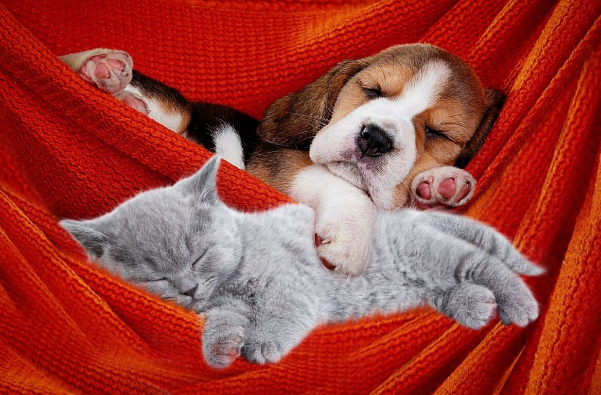 Dog Cat Cute Pets Animals Puppy  - ParallelVision / Pixabay